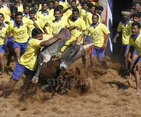 Live: Jallikattu to be held today, TN CM to attend
