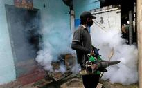 300 killed in dengue outbreak in Sri Lanka
