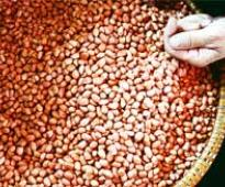 India's groundnut oil output may drop by 41 per cent