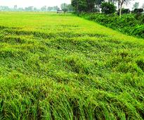 Delhi leeway in aid to farmers