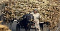 PM's panel recommends sops for loss-making sugar industry