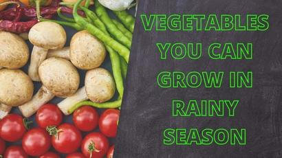 5 vegetables that can be grown in monsoon