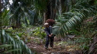 Crude palm oil futures touches fresh high of Rs Rs 748.80 per 10 kg
