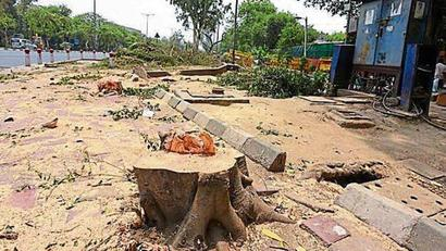 Need to make compensatory planting must before nod to cut trees, Delhi govt told