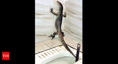 Photos: Three-feet lizard found in Kandivli toilet