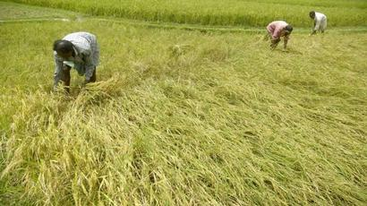 Insurance companies to pay 12% interest to farmers in case of delay in settlement claims