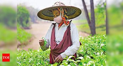 In a first, Assam to set up high schools in tea gardens