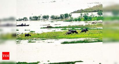 Floods hit over 24 lakh in 11 districts of Bihar