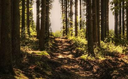 23 More Forest Produce Items Included In Scheme Offering MSP
