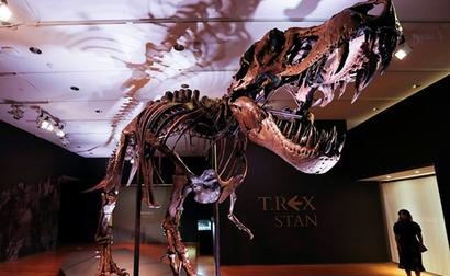 Skeletons Of Largest Known T Rex Dinosaur Up For Auction In New York