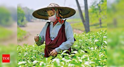 'Assam, West Bengal tea gardens staring at 22% revenue loss'