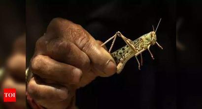 'Declare locust attacks a national disaster'