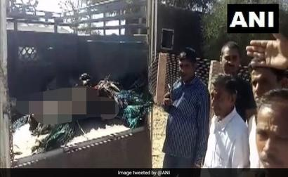 At Least 85 Peacocks Found Dead In Rajasthan